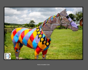 Fun with Photoshop Elements or just horsing around!