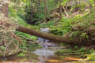 Singing Waters Creek