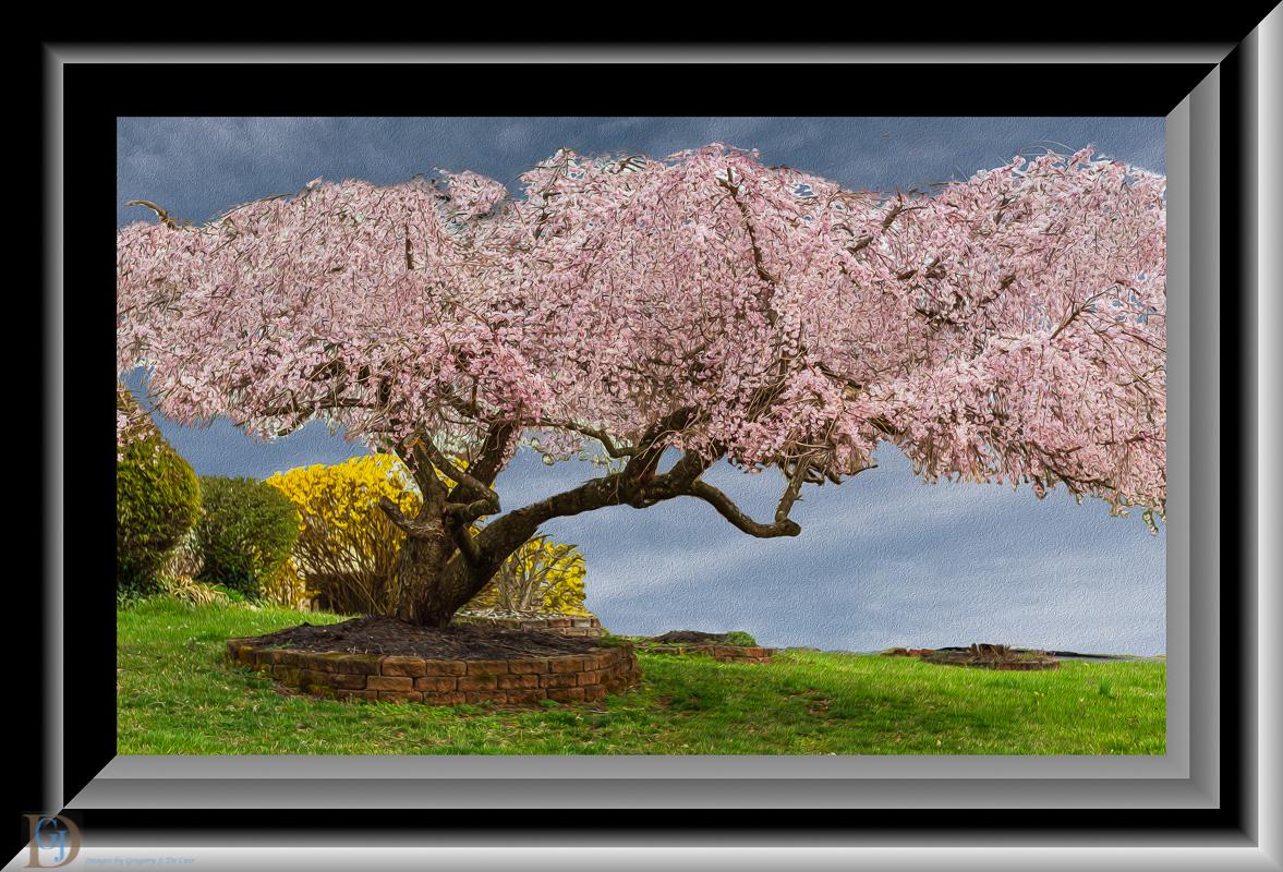 Lone Tree-